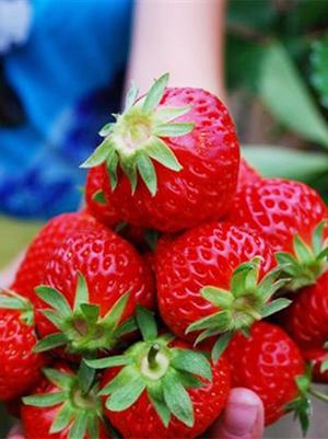 strawberry-300px