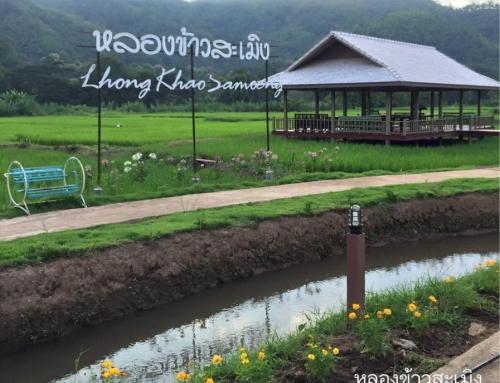หลองข้าวสะเมิง | Lhongkhao Samoeng