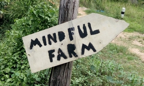 mindful-farm-55