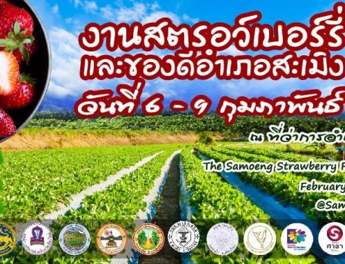 ชวนเที่ยวงานเทศกาลสตรอเบอร์รี ของดีอำเภอสะเมิง ครั้งที่ 19 ประจำปี 2563